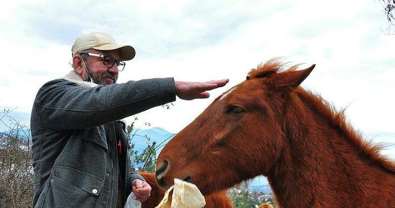 'Çocuğum' dediği yılkı atlarını 10 yıldır elleriyle besliyor