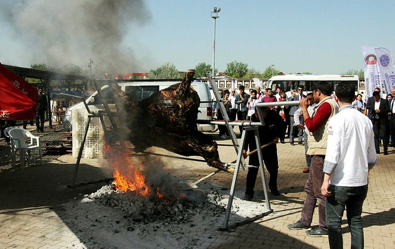 Lezzet festivalinde, bu kez de boğa pişirilirken kuyuya düştü