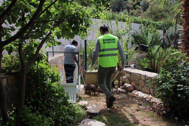 Yılanlardan sonra şimdi de onlar...Bahçelere kadar giriyorlar!