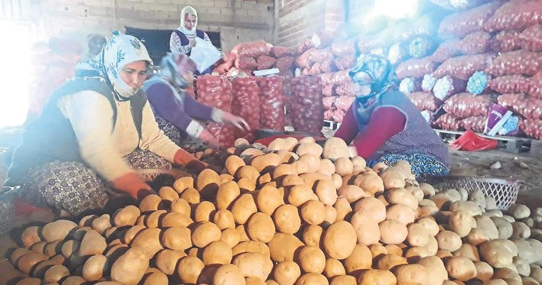 CHP'li Özel'in patates oyununu üretici bozdu