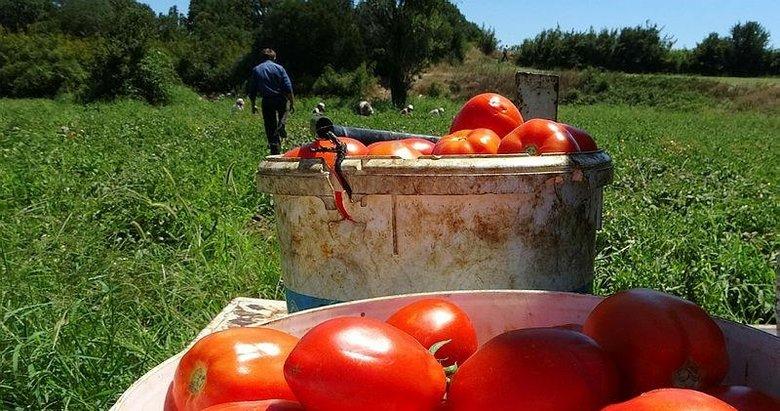 Çanakkale domatesine piyango vurdu