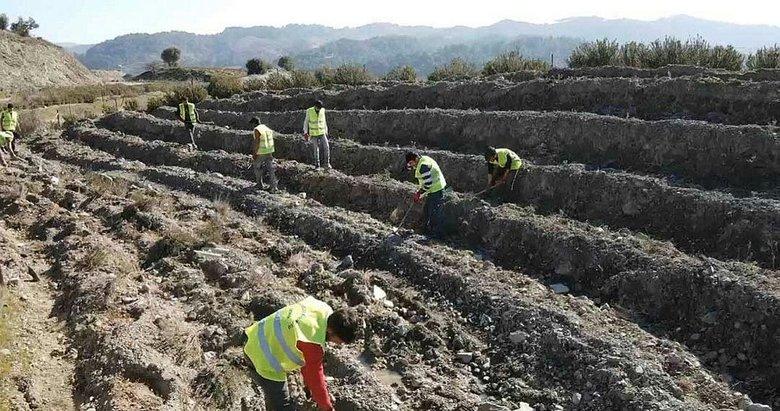 İzmir'de 42 bin fidan bal ormanı için toprakla buluştu