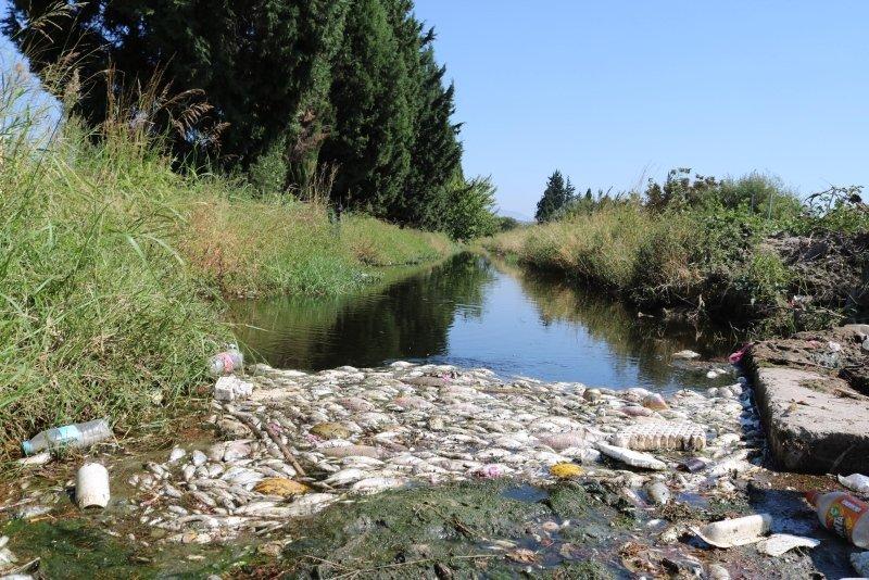 İzmir'de zehirli su paniği! Foça ve Menemen'de sulama kanalında balık ölümleri korkuttu