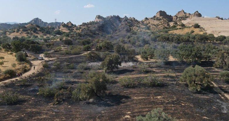 Nazilli'de tarım arazisi yangını! Zeytin ve incir ağaçları küle döndü
