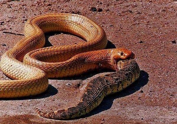 Vahşi doğadan inanılmaz görüntüler