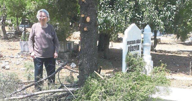 Budama değil ağaç katliamı