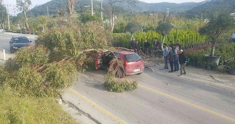 Bodrum'da yolda ilerleyen otomobilin üzerine ağaç devrildi! 3 kişi yaralandı