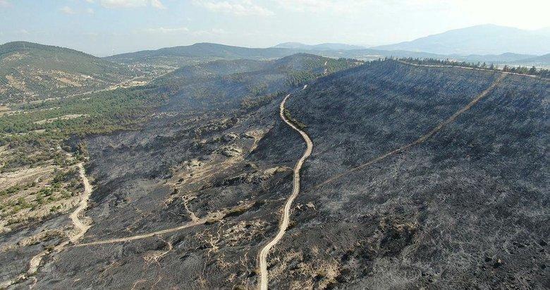 Foça'da yanan alan havadan görüntülendi! Yangının sebebi belli oldu