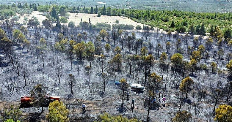 Manisa'da iki ilçede çıkan orman yangınları kontrol altına alındı