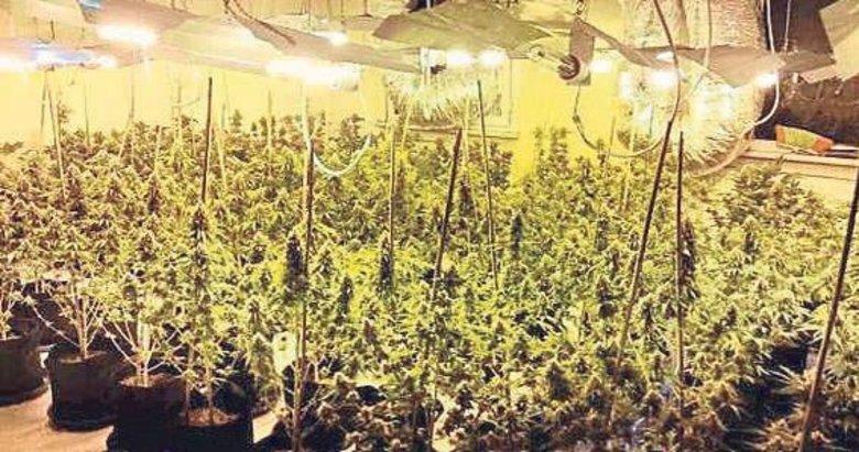 Çatı katına 1 milyon liralık uyuşturucu serası kurdu!