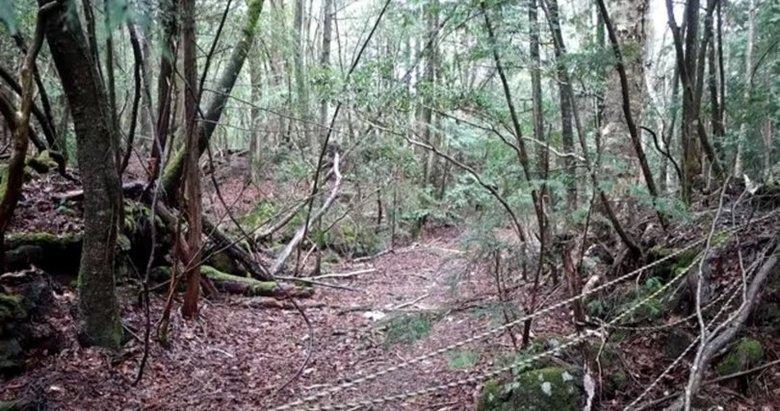 Japonya'daki intihar ormanında intihar vakası!