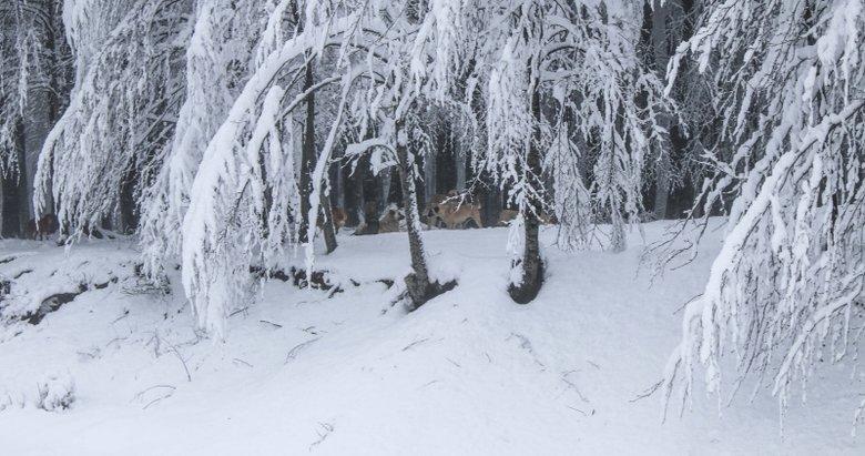 Kütahya'da kar kalınlığı 30 santimetreye ulaştı