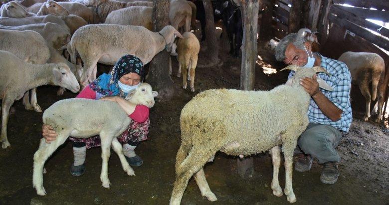 Koyunları ölen Çelikel çiftine Başkan Erdoğan'dan hediye!