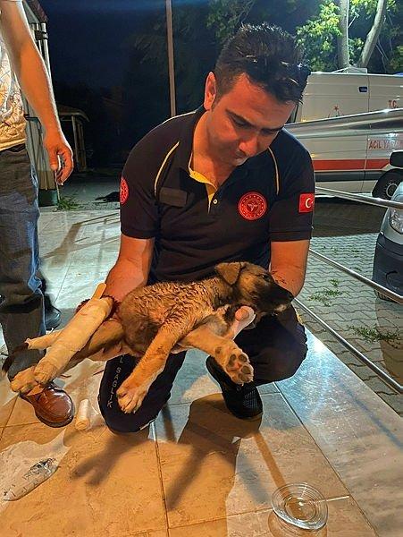 Yol kenarındaki yaralı köpeği kurtaran acil tıp teknisyeni adeta ders verdi