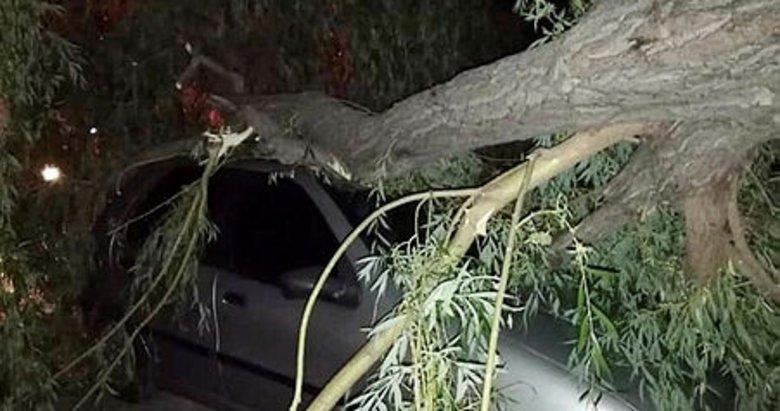 Afyonkarahisar'da araçlar fırtınanın devirdiği ağaçların altında kaldı