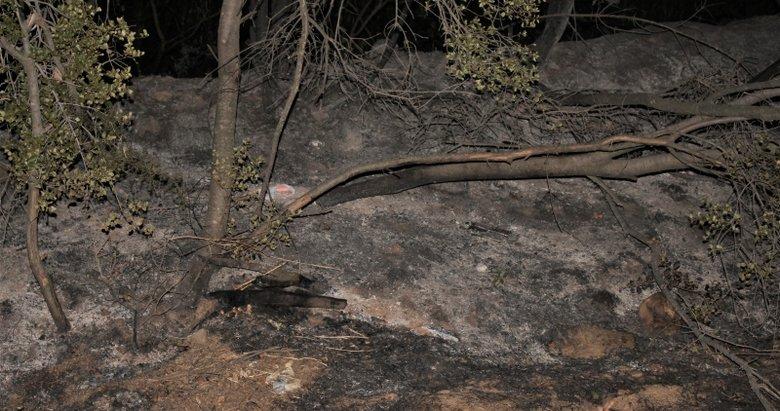 Ödemiş'teki yangında anıt zeytin ağaçları da zarar gördü