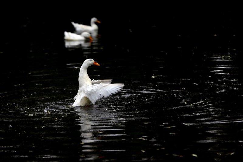 Bozkırın ortasındaki Balıklı Göl güzelliğiyle büyülüyor