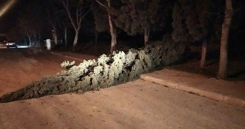 Alaşehir'de fırtına nedeniyle ağaç devrildi
