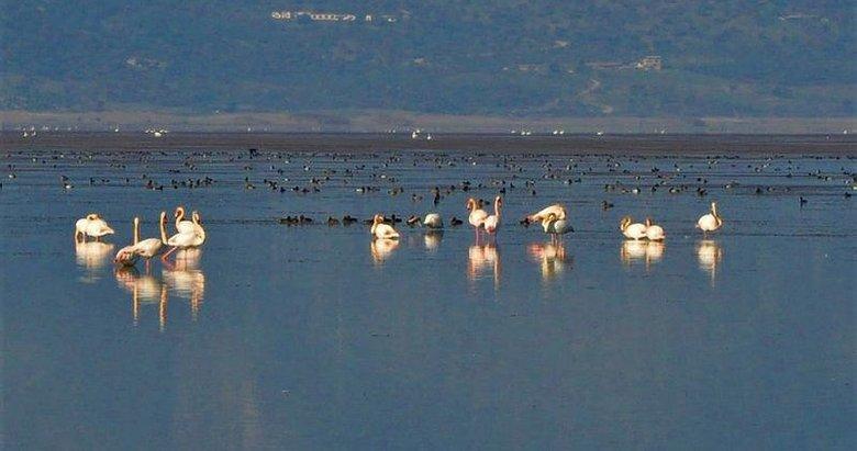Manisa'nın 'kuş cenneti' Marmara Gölü'nden göç