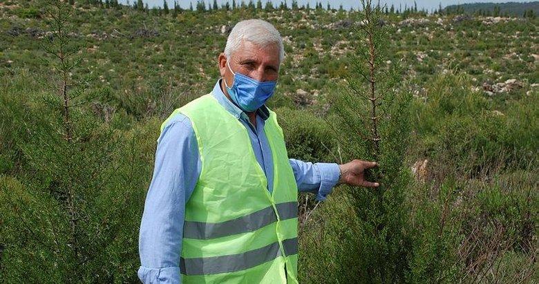 Fidanların dedesi! 39 yıldır İzmir ormanlarını ağaçla buluşturuyor