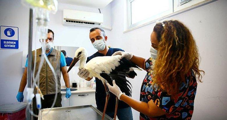Denizli'de elektrik akımına kapılan 3 leylek, tedaviye alındı
