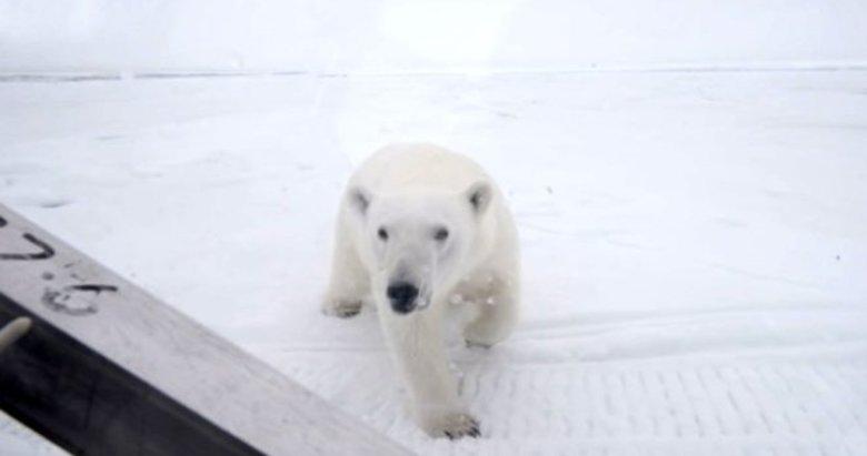 Kutup ayılarını görüntülemek isterken ölümle burun buruna geldi