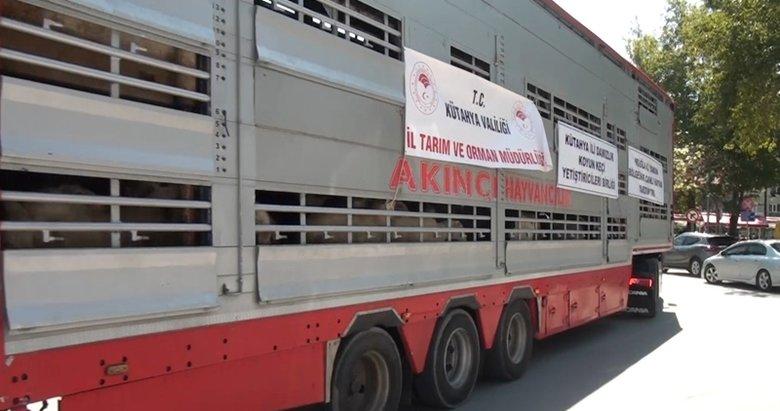 Kütahyalılardan yangın mağduru Muğla'ya hayvan desteği