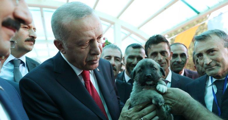 Başkan Erdoğan'a Sivas'ta sürpriz hediye