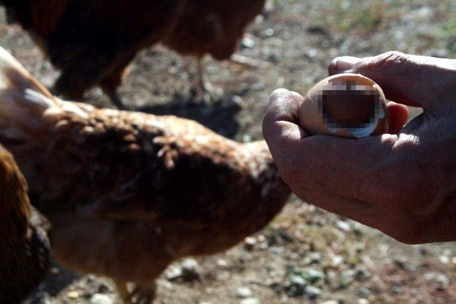 Yumurtanın içinden öyle bir şey çıktı ki...
