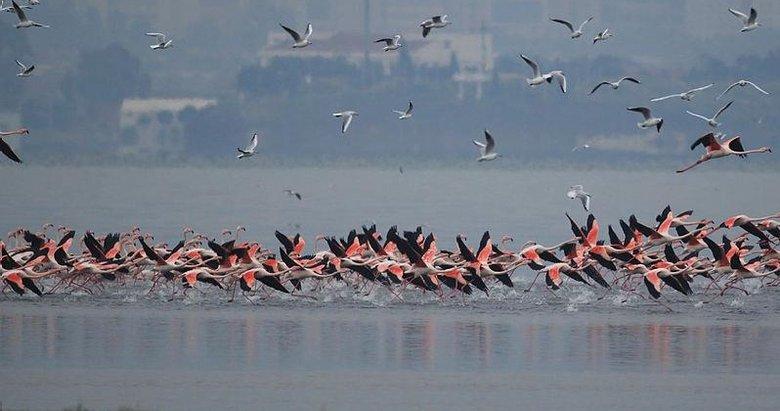 Gediz Deltası'nda kış kuşları kayıt altına alınıyor! İzmir Kuş Cenneti'nde nüfus sayımı