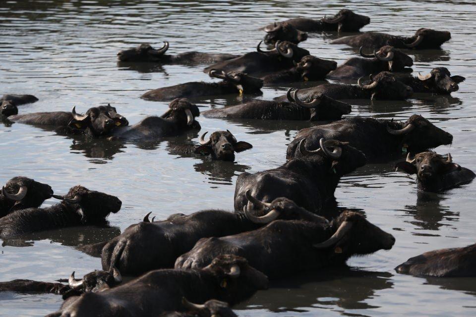 Afrika savanası değil Balıkesir