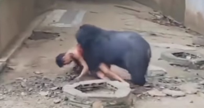 Dehşete düşüren görüntü! Kafese giren adam ayıya yem oldu...