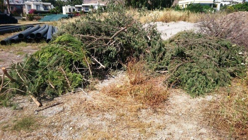 Bodrum'da sahili genişletmek için ağaç katliamı yaptılar