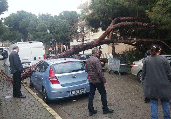 Çam ağacı, 2 otomobilin üzerine devrildi