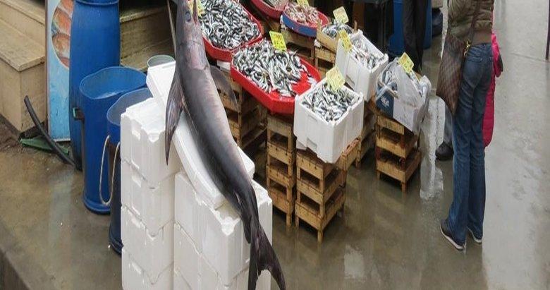Dev kılıç balığı görenleri şaşkına döndürdü