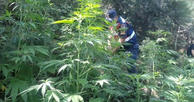 Manisa'da ormanlık araziyi uyuşturucu bahçesine çevirmişler