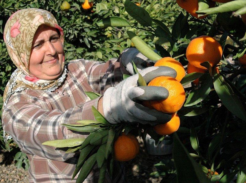 Günde 2 taneden fazla mandalina yemek tahmininizden daha zararlı