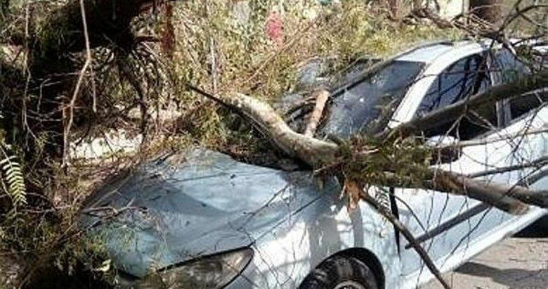 İzmir'de fırtına kabusu geri döndü! Ağaçlar otomobillerin üzerine devrildi