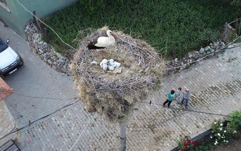 Çanakkale'de leyleğin 'yavru' nöbeti