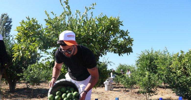 Gönüllü öğrenciler, İzmir'de ihtiyaç sahipleri için mandalina topladı