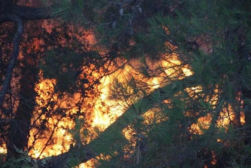 Ciğerlerimiz yandı! Foça'daki yangından geriye kalanlar...
