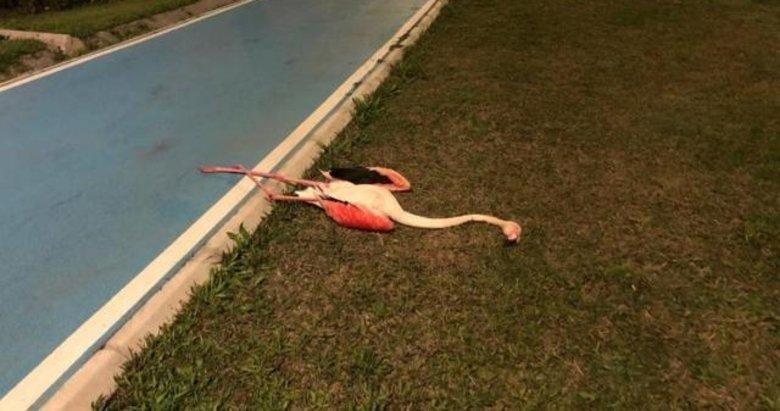 9 flamingonun neden öldüğü belli oldu! İzmir'de bulunmuşlardı