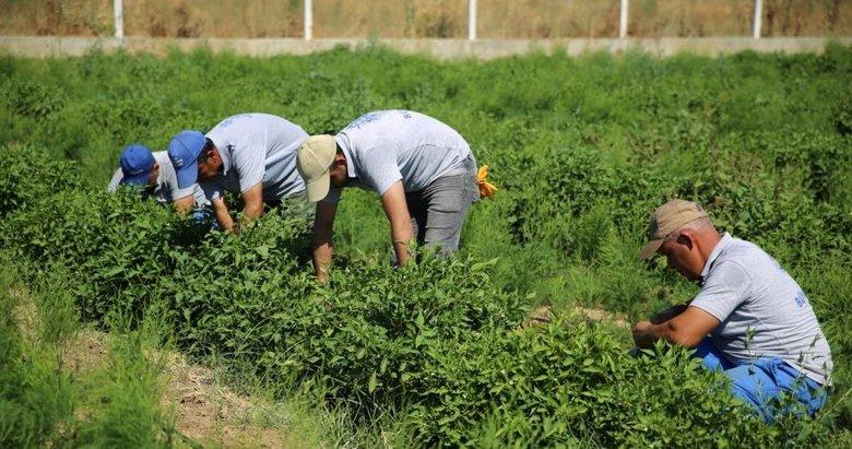 Çiftçilere müjde! 5 yıl geriye dönük vergi iadesi yapılacak