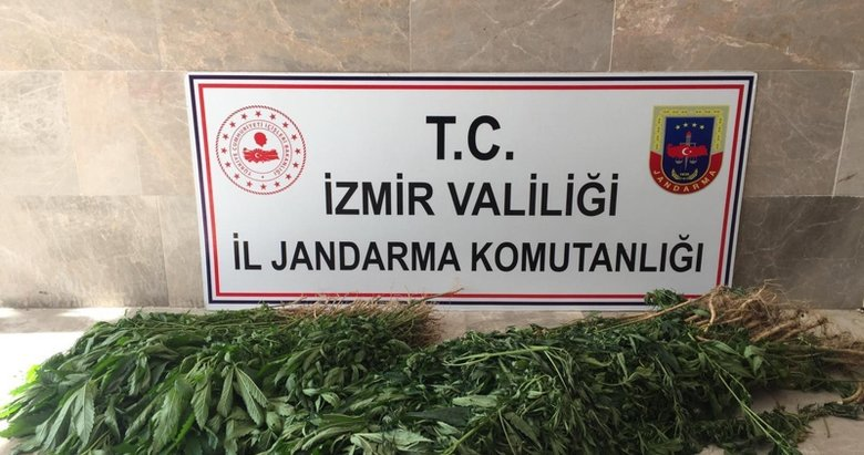 İzmir'de uyuşturucu operasyonu: 680 kök Hint keneviri ele geçirildi