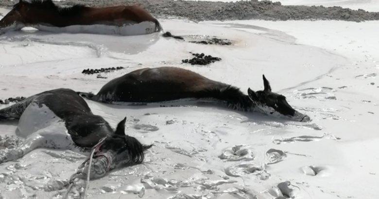Aydın'da mermer çamuruna saplanan atları itfaiye kurtardı