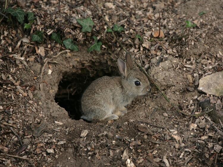 Tavşan deliğinin arkasından çıktı! 700 yıllık sığınak...
