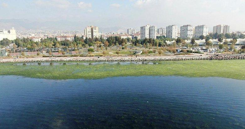 İzmir'de yine aynı manzara! Tüm sahil yemyeşil oldu
