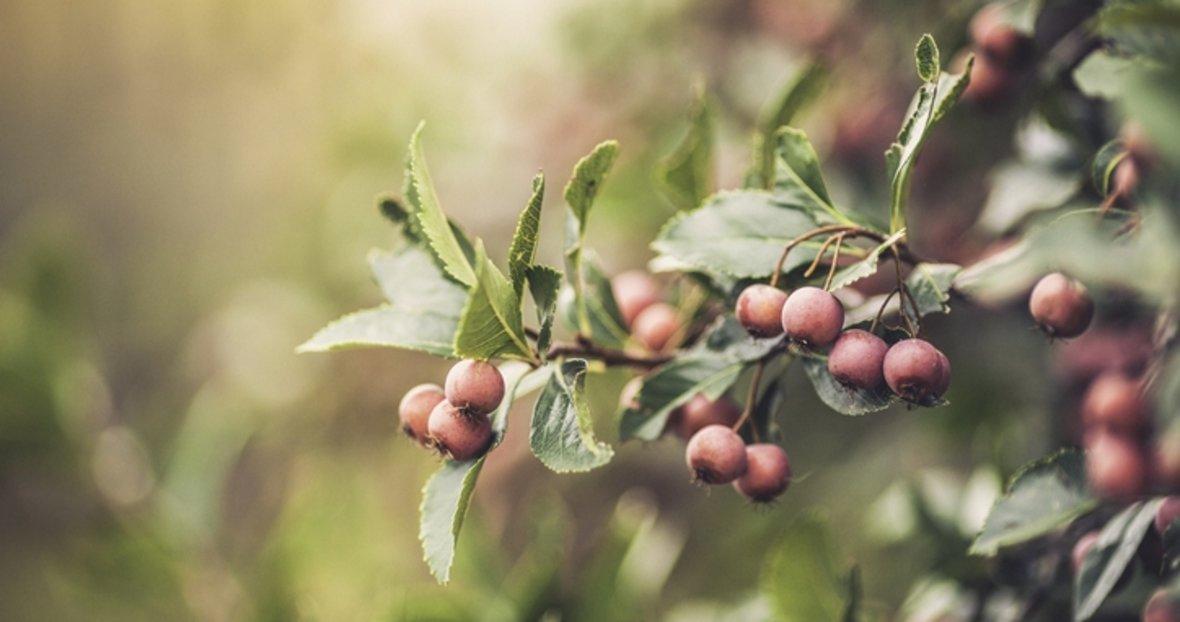 testosteron artiran bitkiler