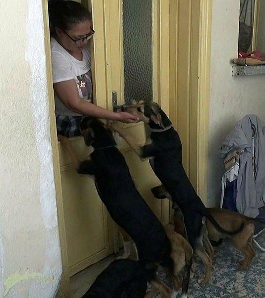 Evde 18 köpek besleyince, ev sahibi ve komşularıyla başı derde girdi