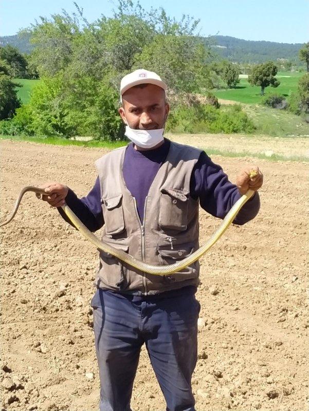 Çiftçi eliyle yakaladı! Şaşkınlıkla izlediler
